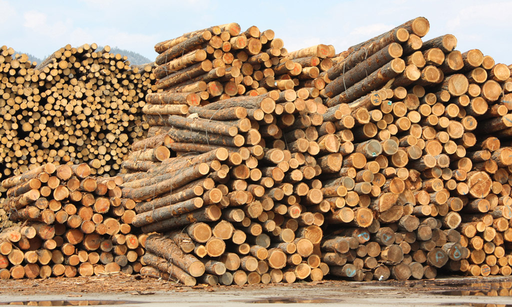Forest and wood products industry strong as ever
