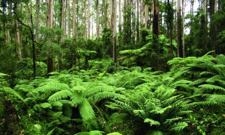 Pulp and peel promotes new growth forest