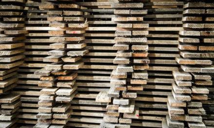 Tasmanian Timber