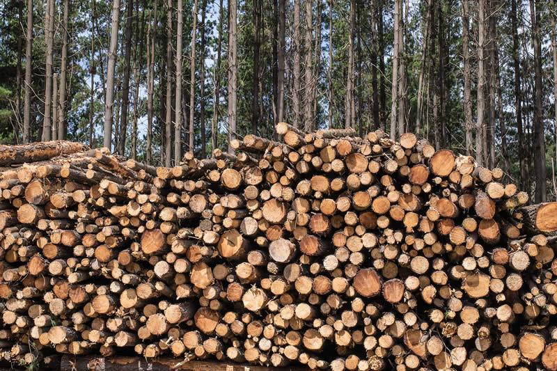 Aussie Logs for Aussie Jobs